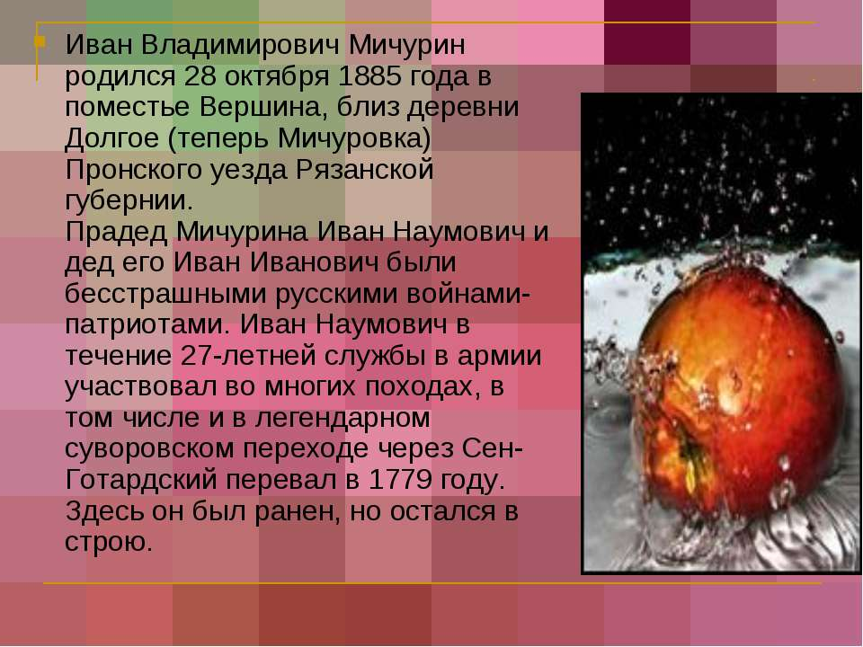Иван Владимирович Мичурин родился 28 октября 1885 года в поместье Вершина, бл...