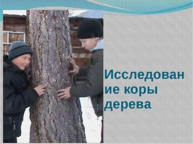Исследование коры дерева