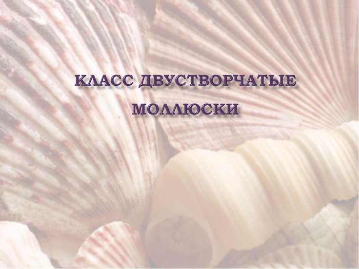 Скачать презентацию на тему:класс двустворчатые моллюски