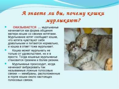 А знаете ли вы, почему кошки мурлыкают? ОКАЗЫВАЕТСЯ … мурлыканье начинается к...