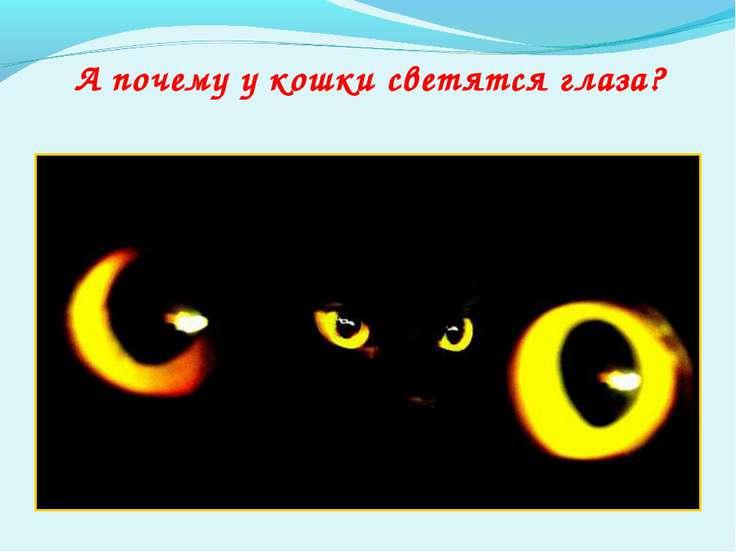 А почему у кошки светятся глаза?