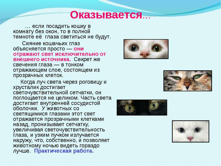 Оказывается… … если посадить кошку в комнату без окон, то в полной темноте её...