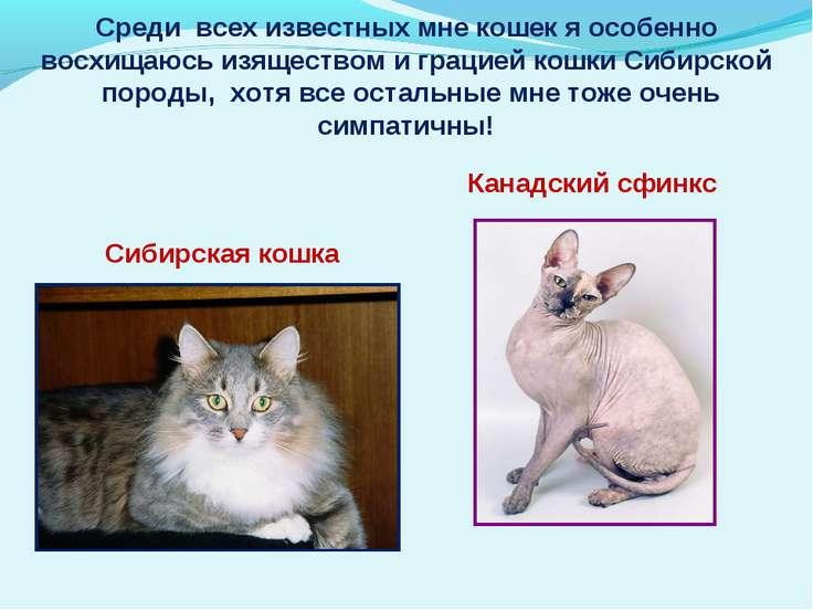 Среди всех известных мне кошек я особенно восхищаюсь изяществом и грацией кош...