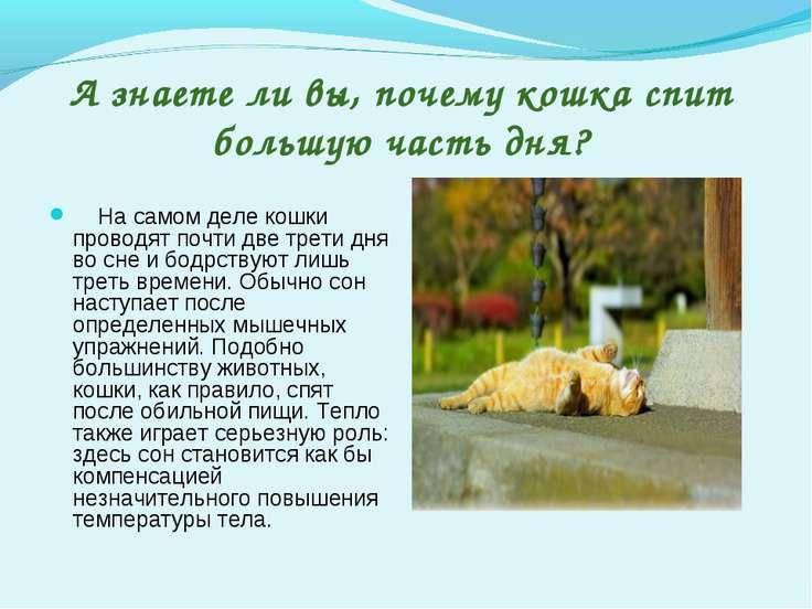 А знаете ли вы, почему кошка спит большую часть дня? На самом деле кошки пров...