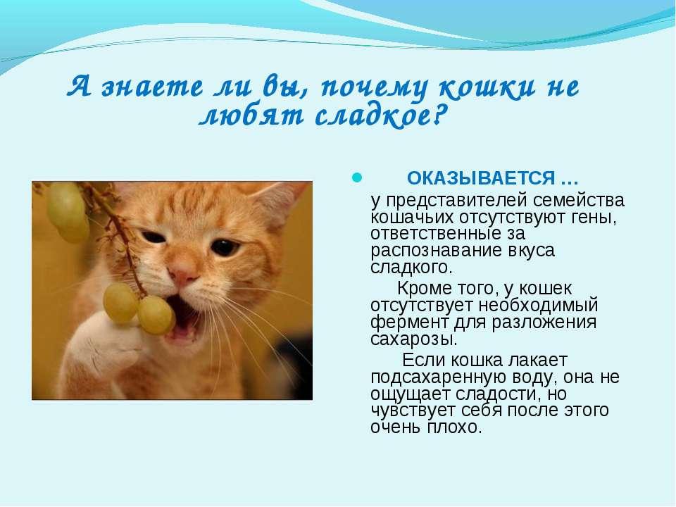 А знаете ли вы, почему кошки не любят сладкое? ОКАЗЫВАЕТСЯ … у представителей...