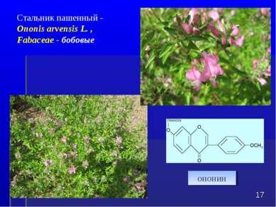 * Стальник пашенный - Ononis arvensis L., Fabaceae - бобовые ононин