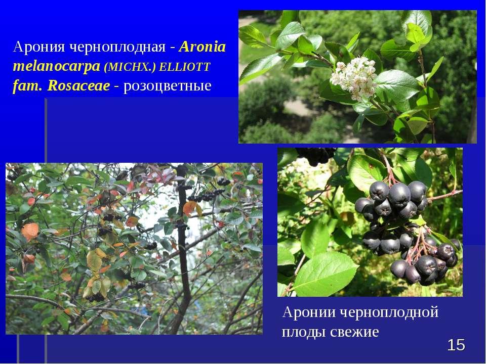 Аронии черноплодной плоды свежие * Арония черноплодная - Aronia melanocarpa (...