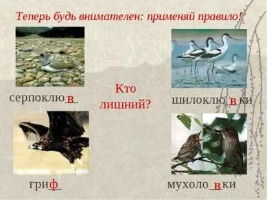 Теперь будь внимателен: применяй правило! серпоклю__ шилоклю__ки гри__ мухоло...