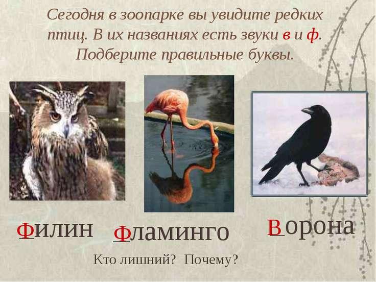 Сегодня в зоопарке вы увидите редких птиц. В их названиях есть звуки в и ф. П...