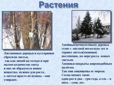 Лиственные деревья и кустарники сбросили листья, так как зимой на холоде и пр...