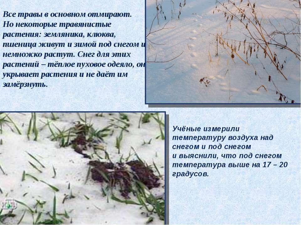 Все травы в основном отмирают. Но некоторые травянистые растения: земляника, ...