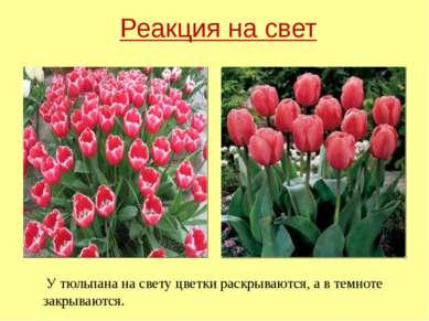 У тюльпана на свету цветки раскрываются, а в темноте закрываются. Реакция на ...