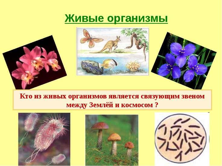 Живые организмы Кто из живых организмов является связующим звеном между Землё...