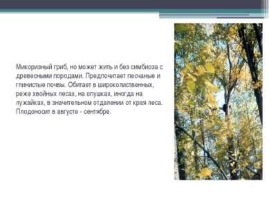Микоризный гриб, но может жить и без симбиоза с древесными породами. Предпочи...