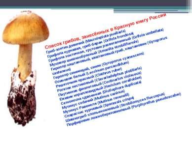 Список грибов, занесённых в Красную книгу России Гриб-зонтик девичий (Macrole...
