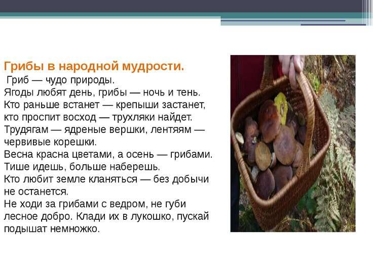 Грибы в народной мудрости. Гриб — чудо природы. Ягоды любят день, грибы — ноч...