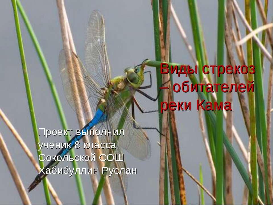 Такие разные жуки Проект выполнил ученик 8 класса Сокольской СОШ Хабибуллин Р...