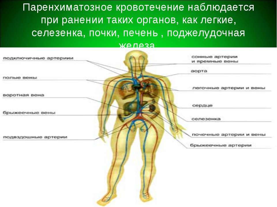 Паренхиматозное кровотечение наблюдается при ранении таких органов, как легки...