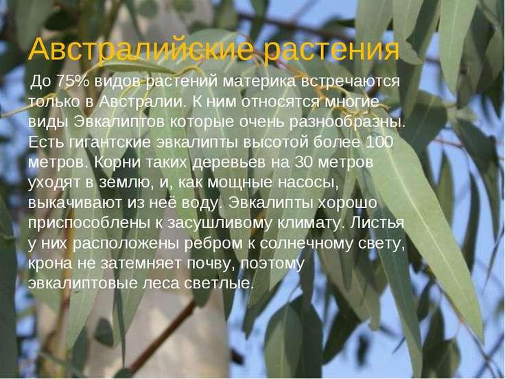 Австралийские растения До 75% видов растений материка встречаются только в Ав...