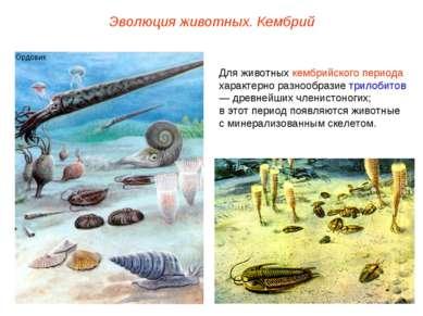 Эволюция животных. Кембрий Для животных кембрийского периода характерно разно...