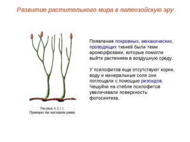 Появление покровных, механических, проводящих тканей были теми ароморфозами, ...