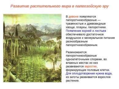 В девоне появляются папоротникообразные — травянистые и древовидные хвощи, пл...