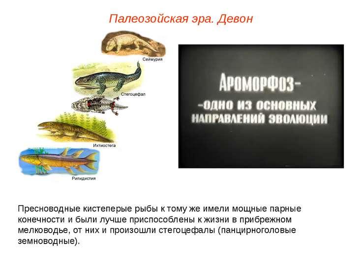 Палеозойская эра. Девон Пресноводные кистеперые рыбы к тому же имели мощные п...