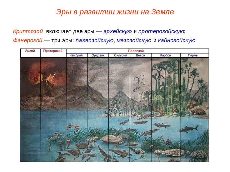 Криптозой включает две эры — архейскую и протерозойскую; Фанерозой — три эры:...