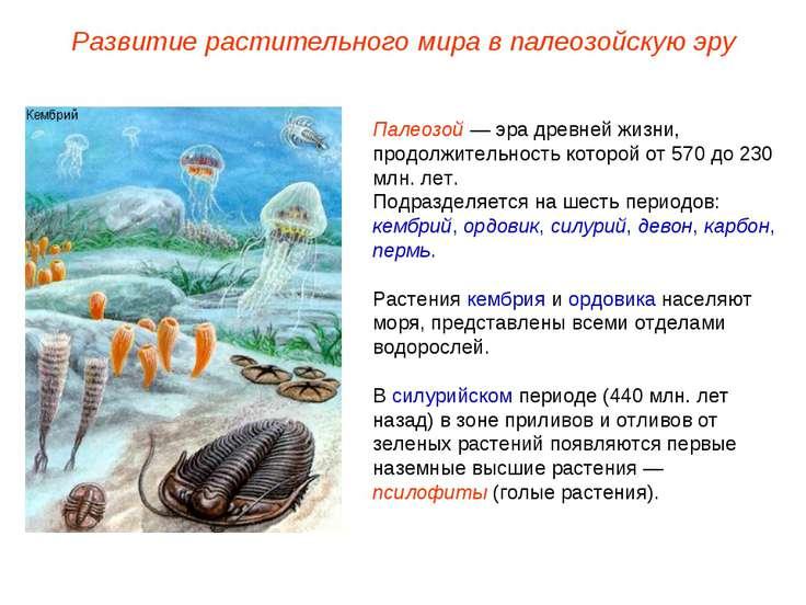 Палеозой — эра древней жизни, продолжительность которой от 570 до 230 млн. ле...