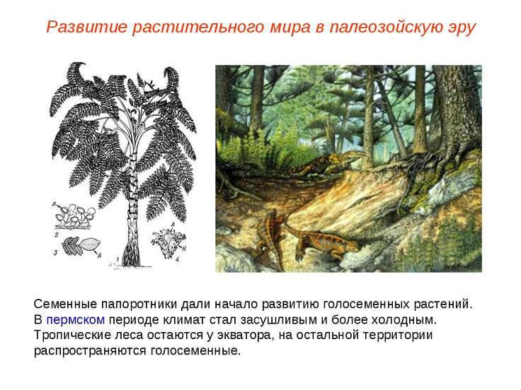 Семенные папоротники дали начало развитию голосеменных растений. В пермском п...