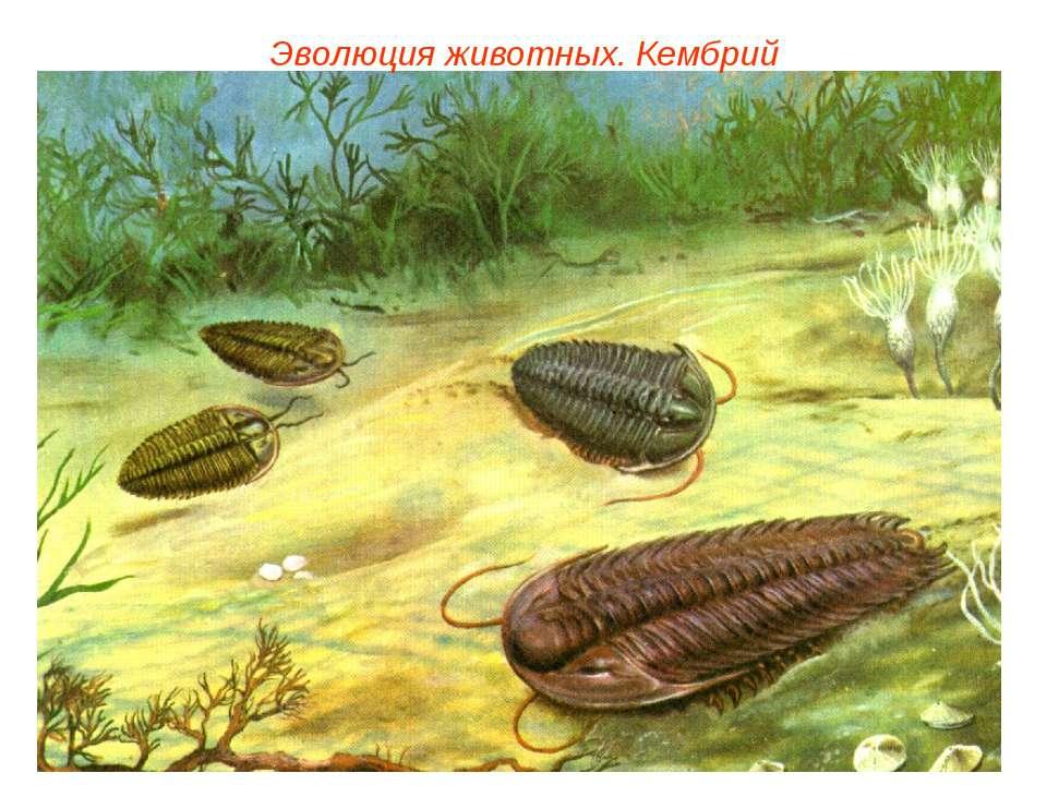 Эволюция животных. Кембрий