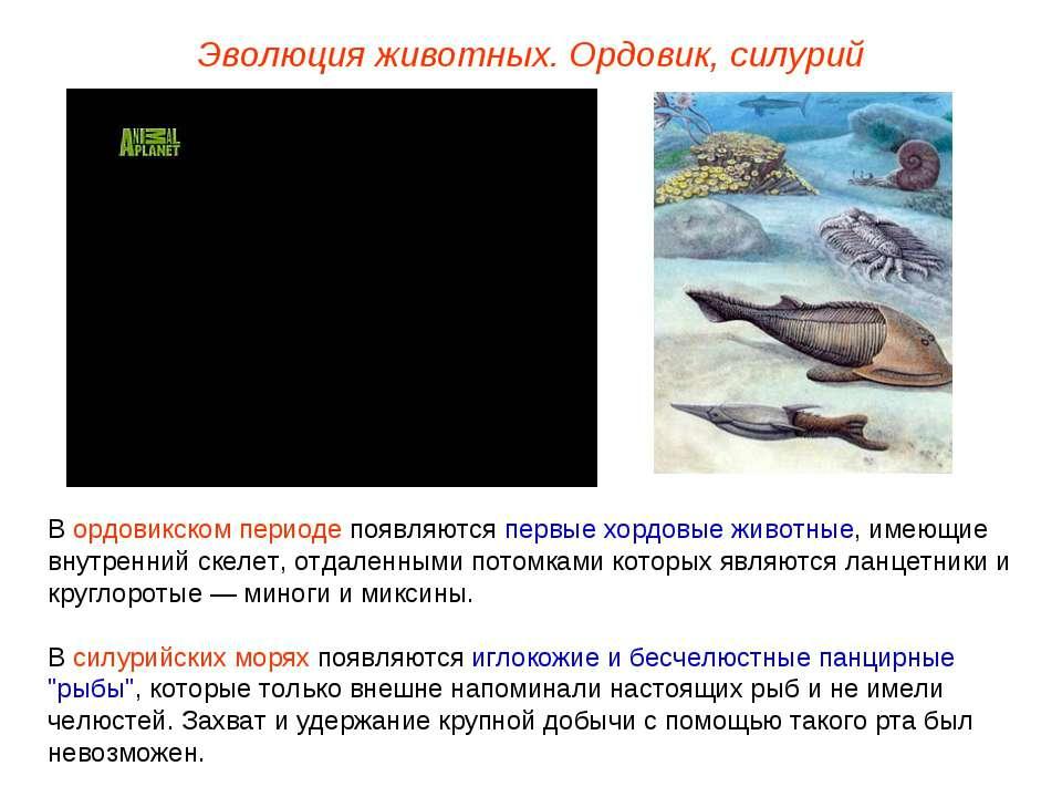 Эволюция животных. Ордовик, силурий В ордовикском периоде появляются первые х...