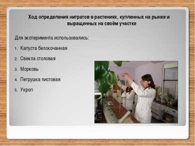 Ход определения нитратов в растениях, купленных на рынке и выращенных на своё...