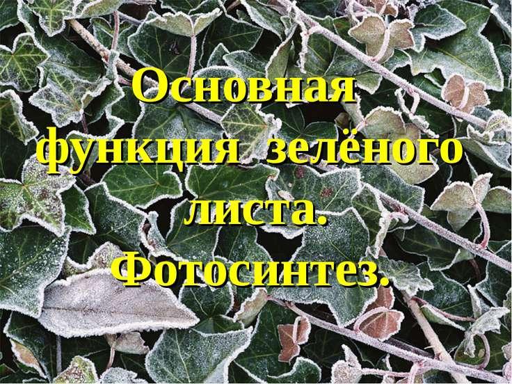 Основная функция зелёного листа. Фотосинтез.