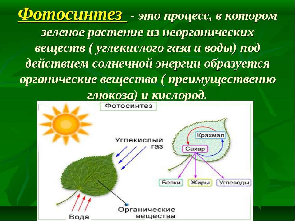 Фотосинтез - это процесс, в котором зеленое растение из неорганических вещест...