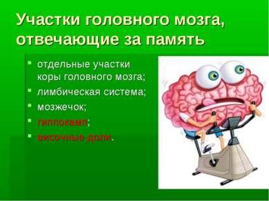Участки головного мозга, отвечающие за память отдельные участки коры головног...