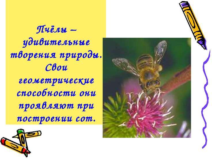Пчёлы – удивительные творения природы. Свои геометрические способности они пр...
