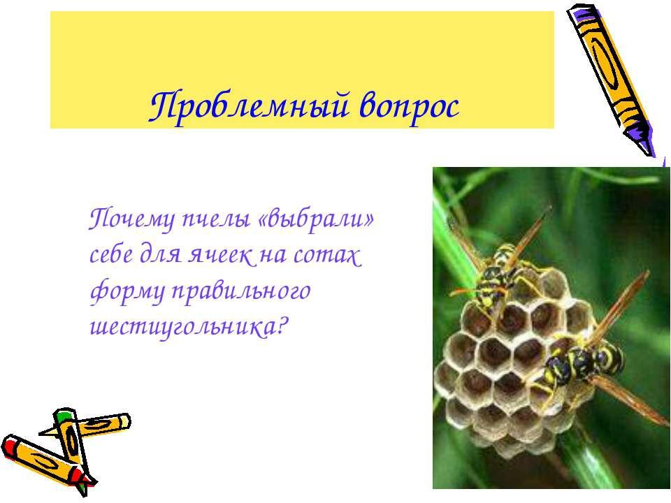 Проблемный вопрос Почему пчелы «выбрали» себе для ячеек на сотах форму правил...