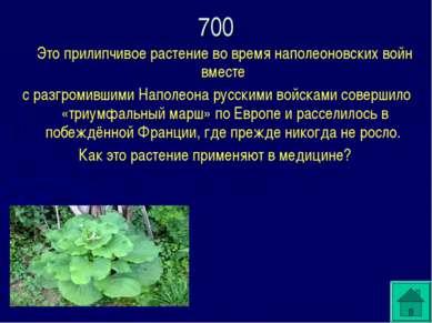 Это прилипчивое растение во время наполеоновских войн вместе с разгромившими ...