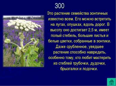 Это растение семейства зонтичных известно всем. Его можно встретить на лугах,...
