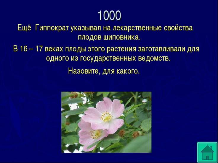 Ещё Гиппократ указывал на лекарственные свойства плодов шиповника. В 16 – 17 ...