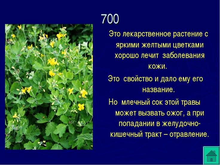 Это лекарственное растение с яркими желтыми цветками хорошо лечит заболевания...