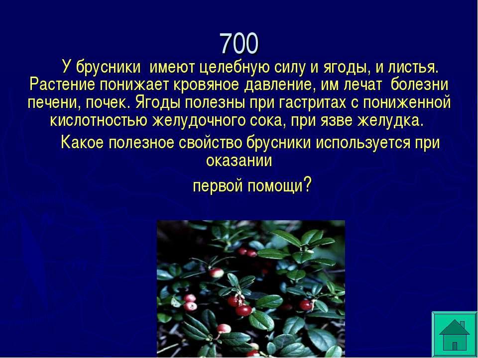 У брусники имеют целебную силу и ягоды, и листья. Растение понижает кровяное ...