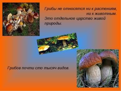 Грибы не относятся ни к растениям, ни к животным. Это отдельное царство живой...
