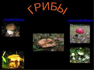съедобные несъедобные Благородный белый гриб Меж грибами знаменит. Под сосной...