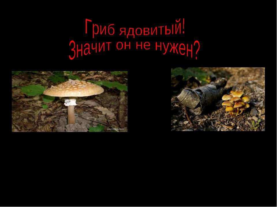 Не бери его, но и не уничтожай! Их грибницы оплетают корни деревьев, снабжают...