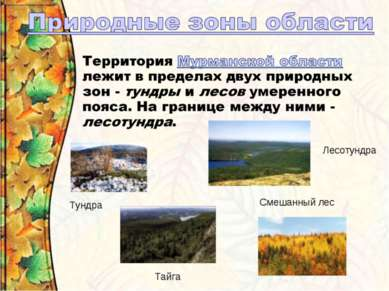 Тундра Лесотундра Тайга Смешанный лес