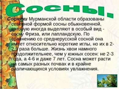 Сосняки Мурманской области образованы северной формой сосны обыкновенной, кот...