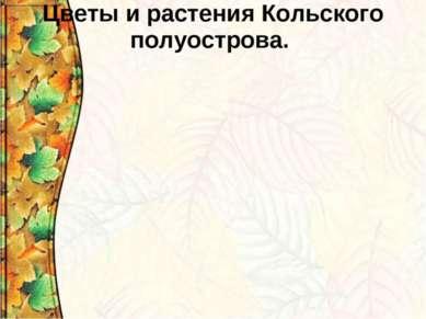 Цветы и растения Кольского полуострова.
