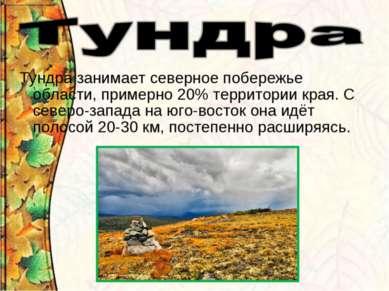 Тундра занимает северное побережье области, примерно 20% территории края. С с...